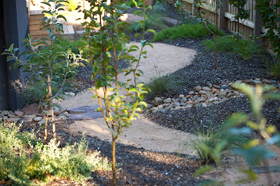 Phillip johnson landscapes save water this spring for Less maintenance plants