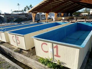 http://1.bp.blogspot.com/-egciqB_kWpU/T9ifGiWRd-I/AAAAAAAAABs/VqqsjB05iSs/s320/Tonga+day+3+-+14.JPG