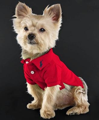 polo Ralph Lauren perros