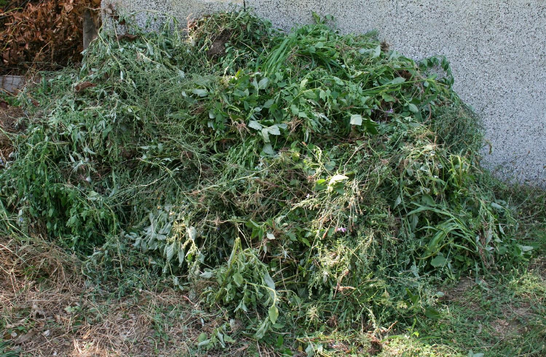 A huge pile of weeds