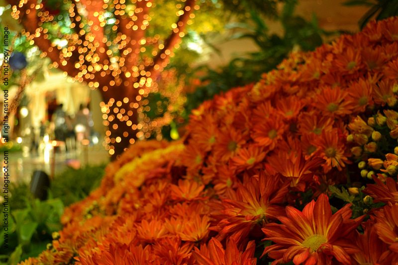 Christmas Lights Decorations Bellagio Las Vegas