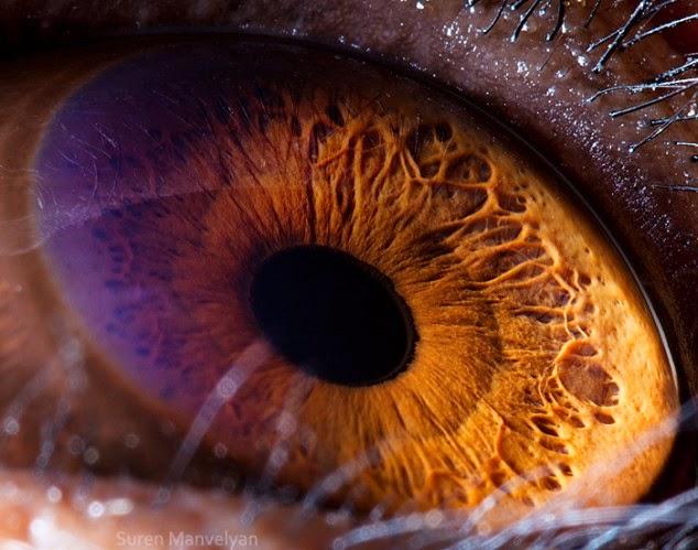 ojo de chimpance