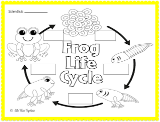 Little Miss Hypothesis - Lessons from the Science Lab: Feeling Froggy!
