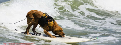 Couverture facebook qualité serf de chien