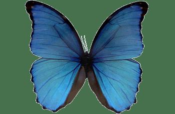 Arti dari kupu biru lagu Slank. Lirik lagu Slank - Kupu Biru