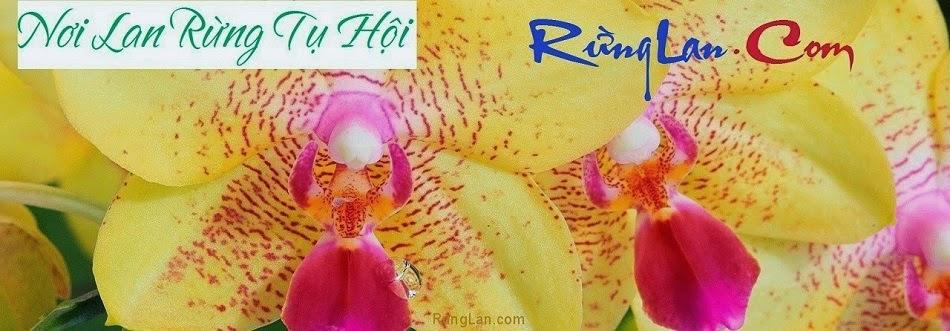 RungLan.com - Chuyên mua bán các loại lan rừng