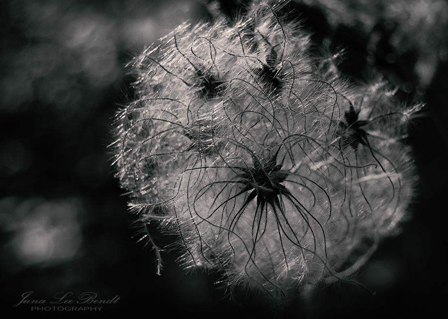 Fotografie Natur Pflanze Blüte
