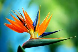 9th Anniversary Gift Bird of Paradise Flower