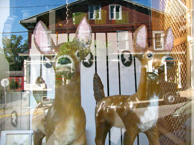 Deer-and-Weekend-Reflections-in-Millerton-New-York