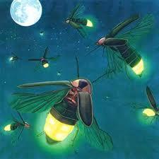 adze kunang kunang