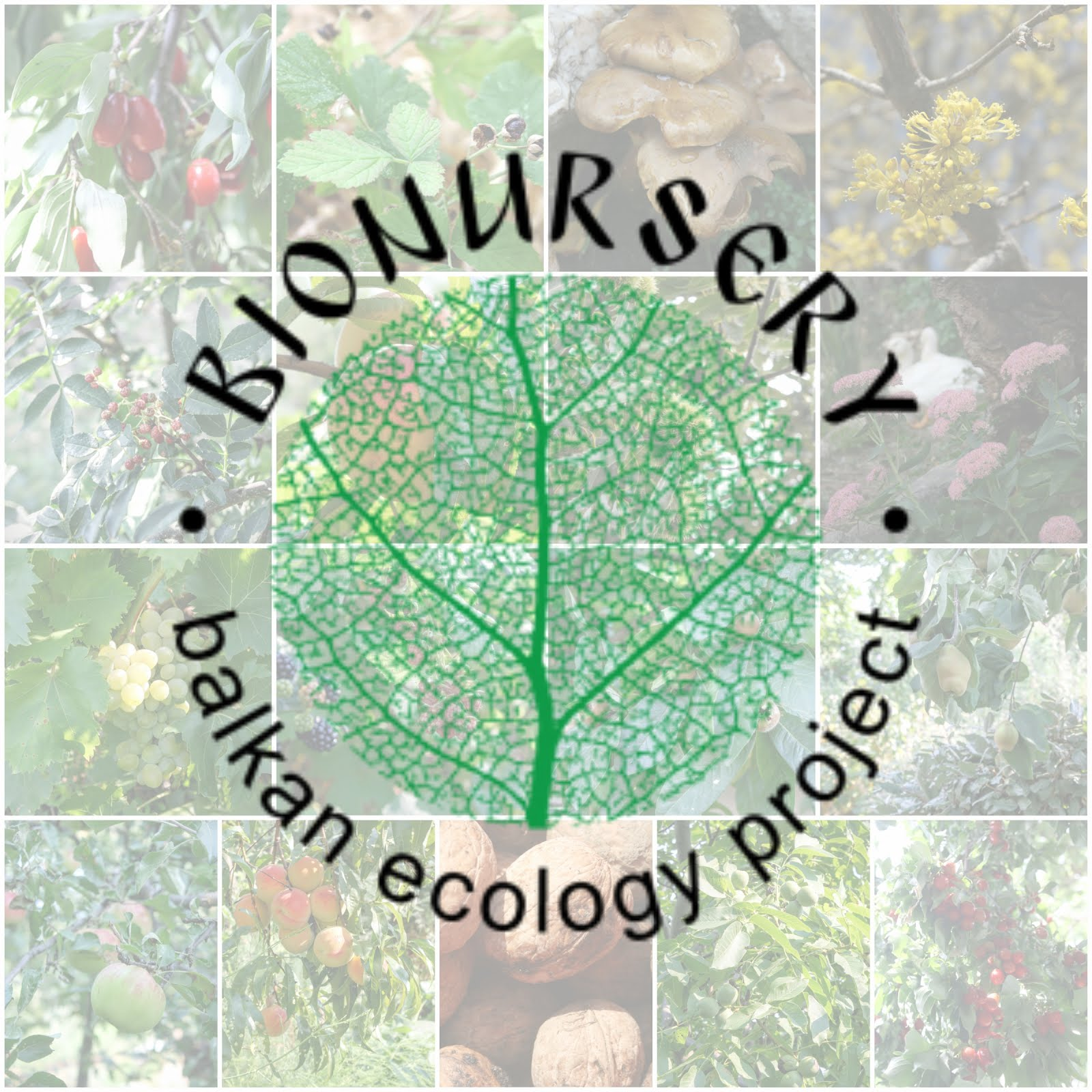 Balkan Ecology Project : Plants to Encourage Biodiversity in the ...