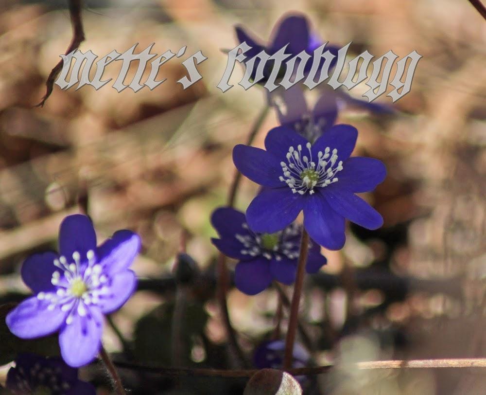 Mettes fotoblogg