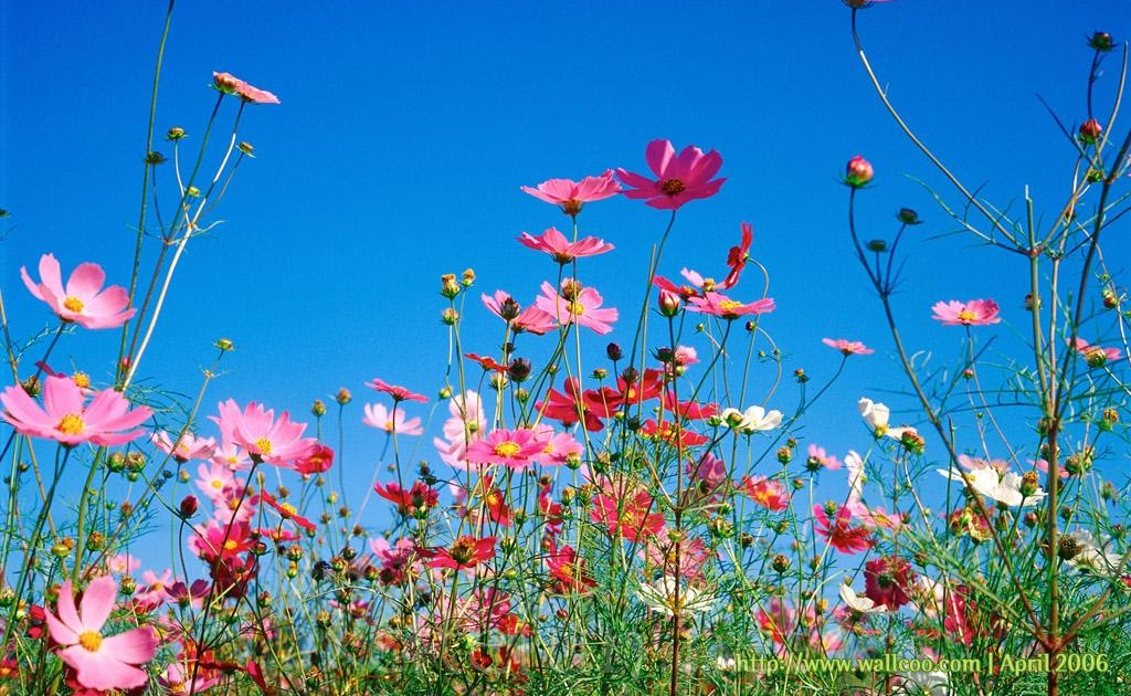 Pictures world spring flower nice wallpaper for World nice photo