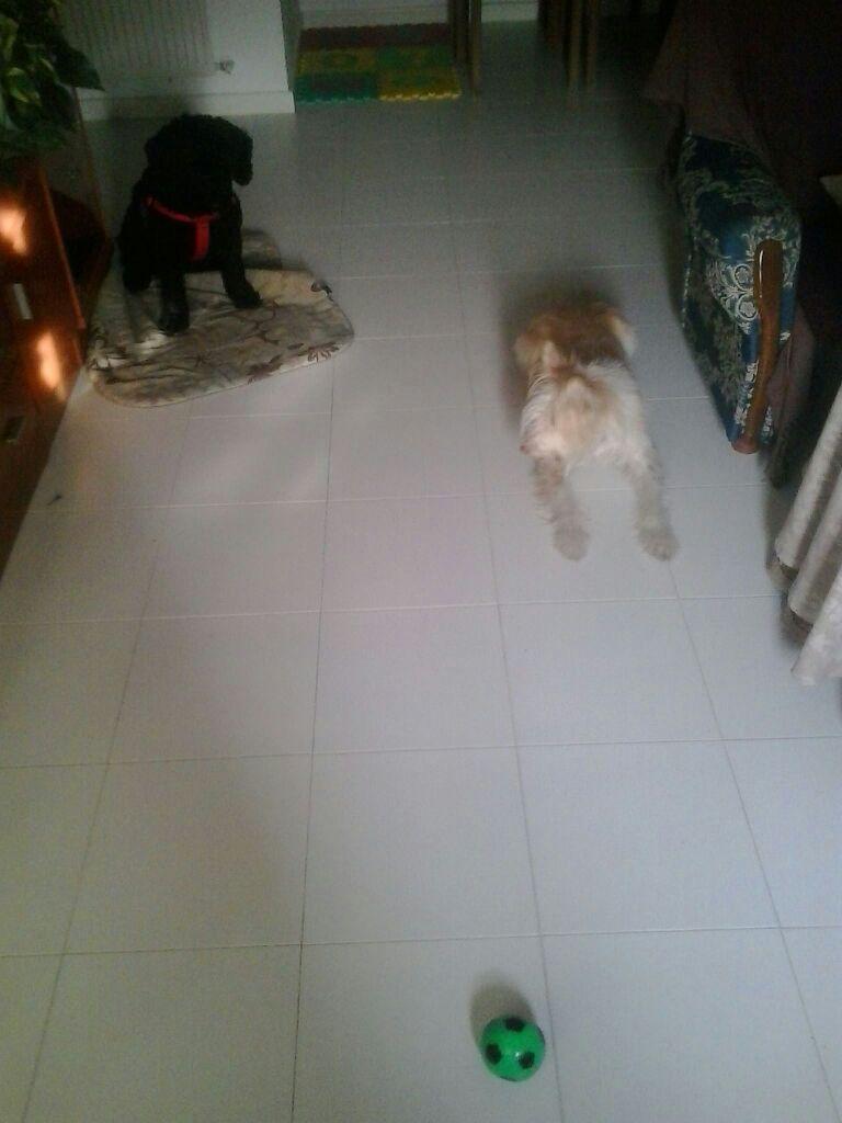 Rocco y Mina