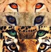 El color de los ojos, el color de la piel que los rodea, es indiferente. Lo que importa es el senti
