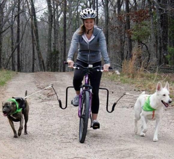 Dog Bike Jogger