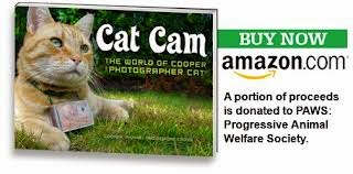 Cat Cam The World Of Cooper The Photographer Cat