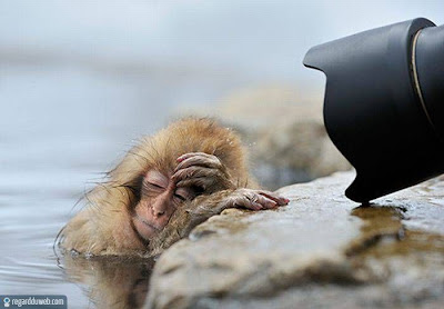 Images drôles et insolites Animal – Singe v73