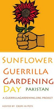 Pakistan's First Sunflower Guerrilla Gardening Project