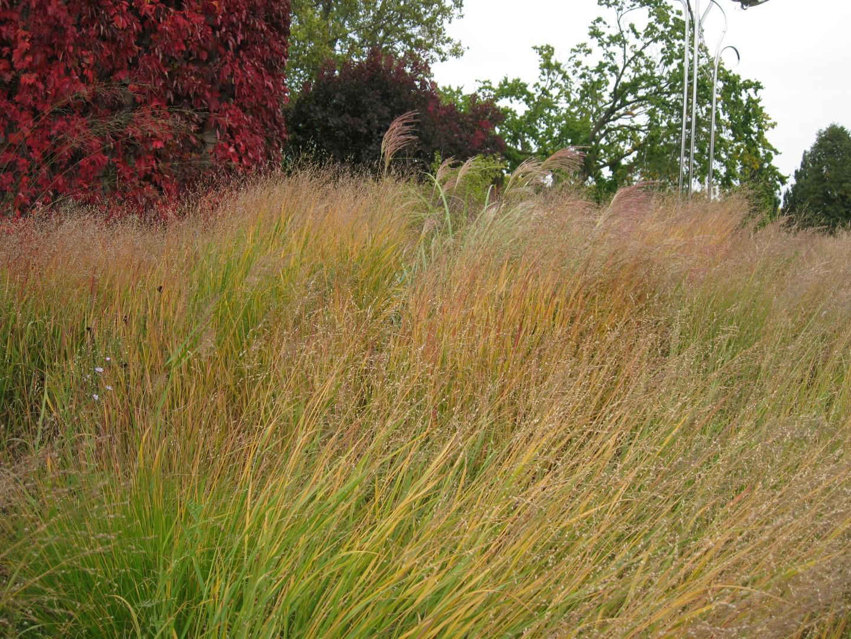 The garden wanderer the toronto botanical gardens piet for Piet oudolf pflanzplan