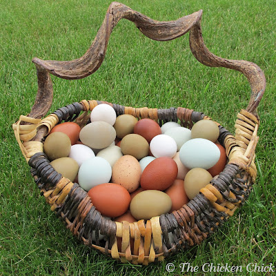 How a Hen Makes an Egg & Egg Oddities. Basket of colored eggs