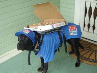 Anjing Pengirim Pizza