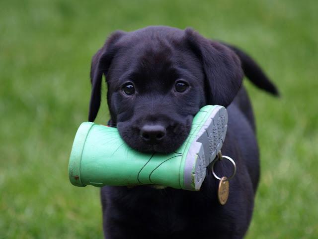 chú chó dễ thương, xinh xắn nhất