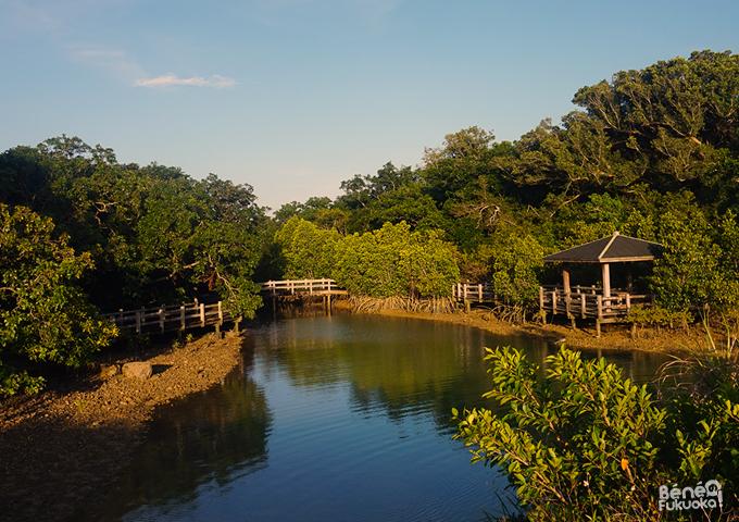 Mangrove Miyakojima, Okinawa