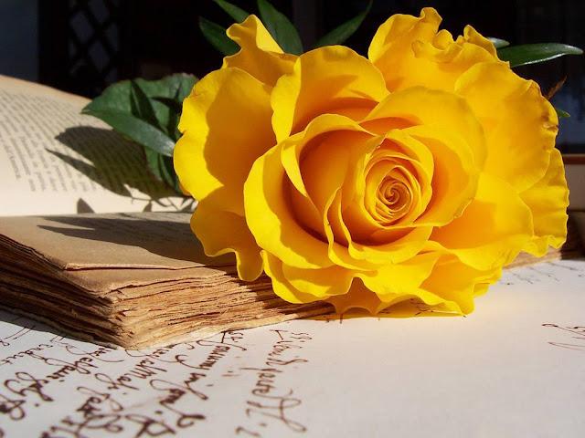 ý nghĩa hoa hồng màu vàng