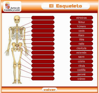 http://www.educa.jcyl.es/educacyl/cm/gallery/Recursos%20Infinity/juegos_jcyl/cuerpo_esq/esqueleto_plus.html