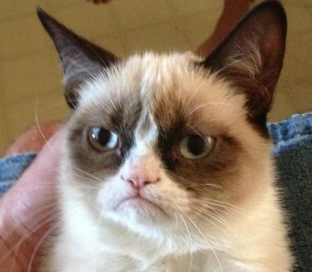 Grumpy Cat La Storia Del Gatto Arrabbiato Che Guadagna 50 Milioni
