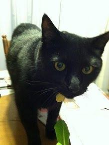 <b>Meet Tazi!</b>