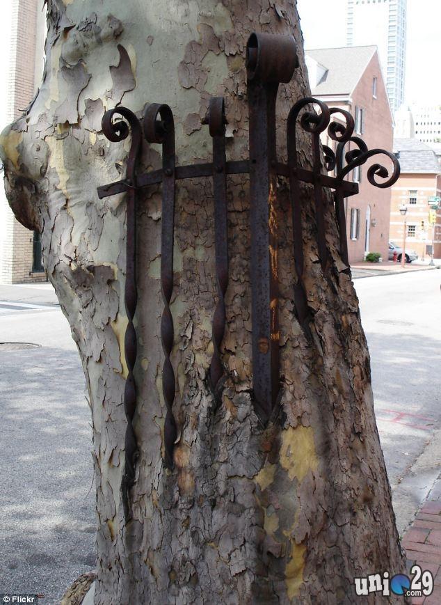 Foto pohon aneh yang dapat memakan apa saja