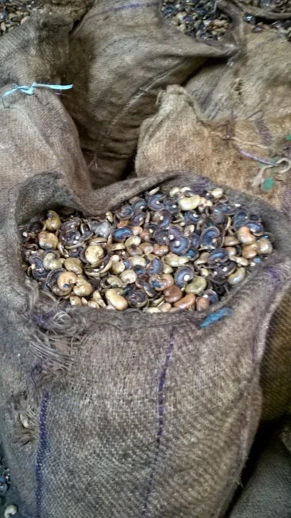 cashew processing, goa, sawantwadi