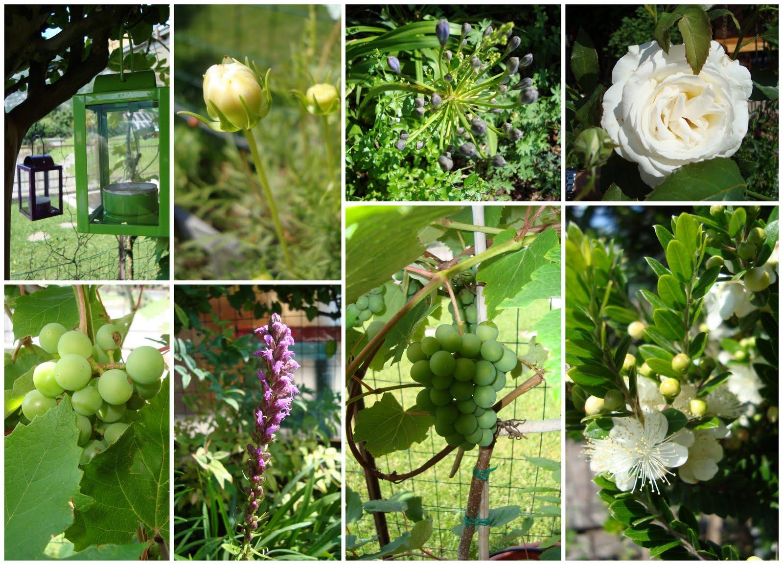 Fiore raro luglio 2011 for Fiori verdi