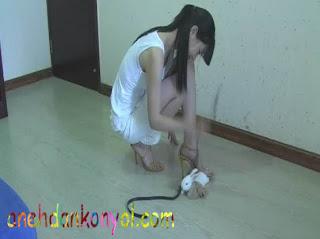 http://anehdankonyol.com