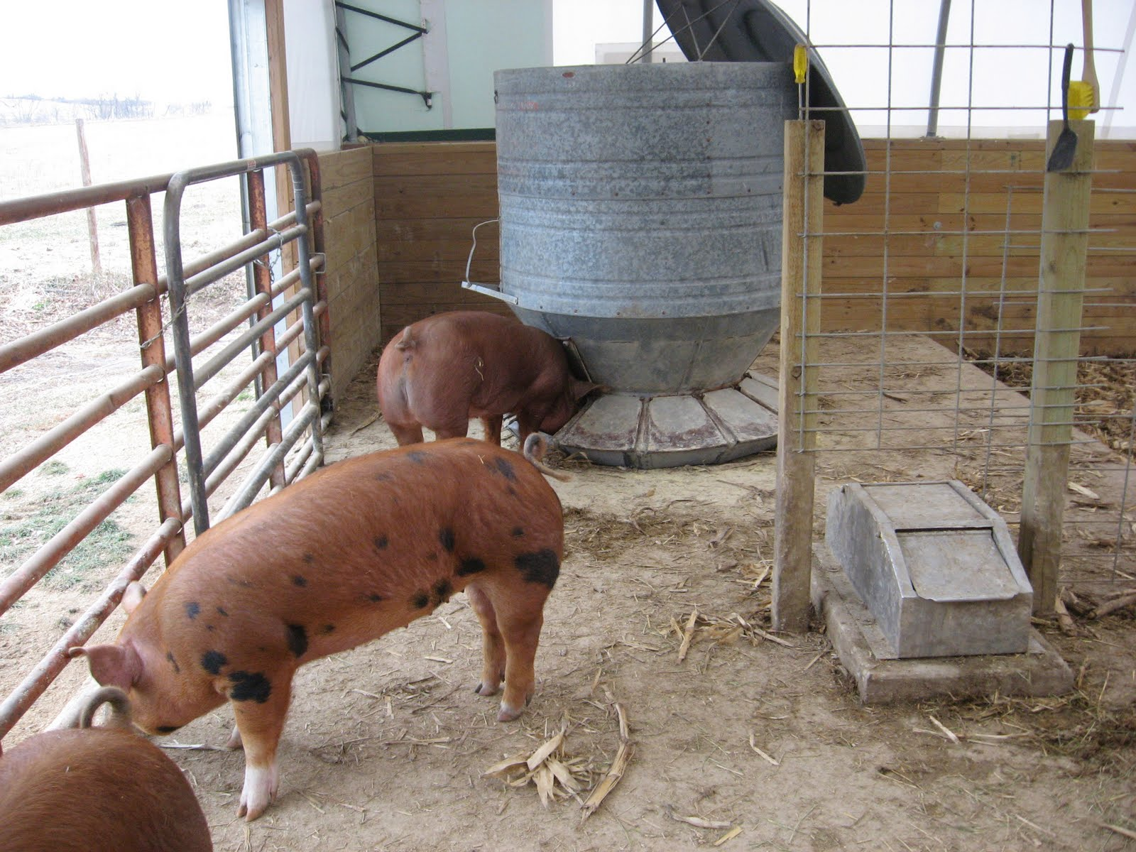 Prairie Fire Farm: January 2012