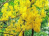 #6 Stunning Flowers Blooming