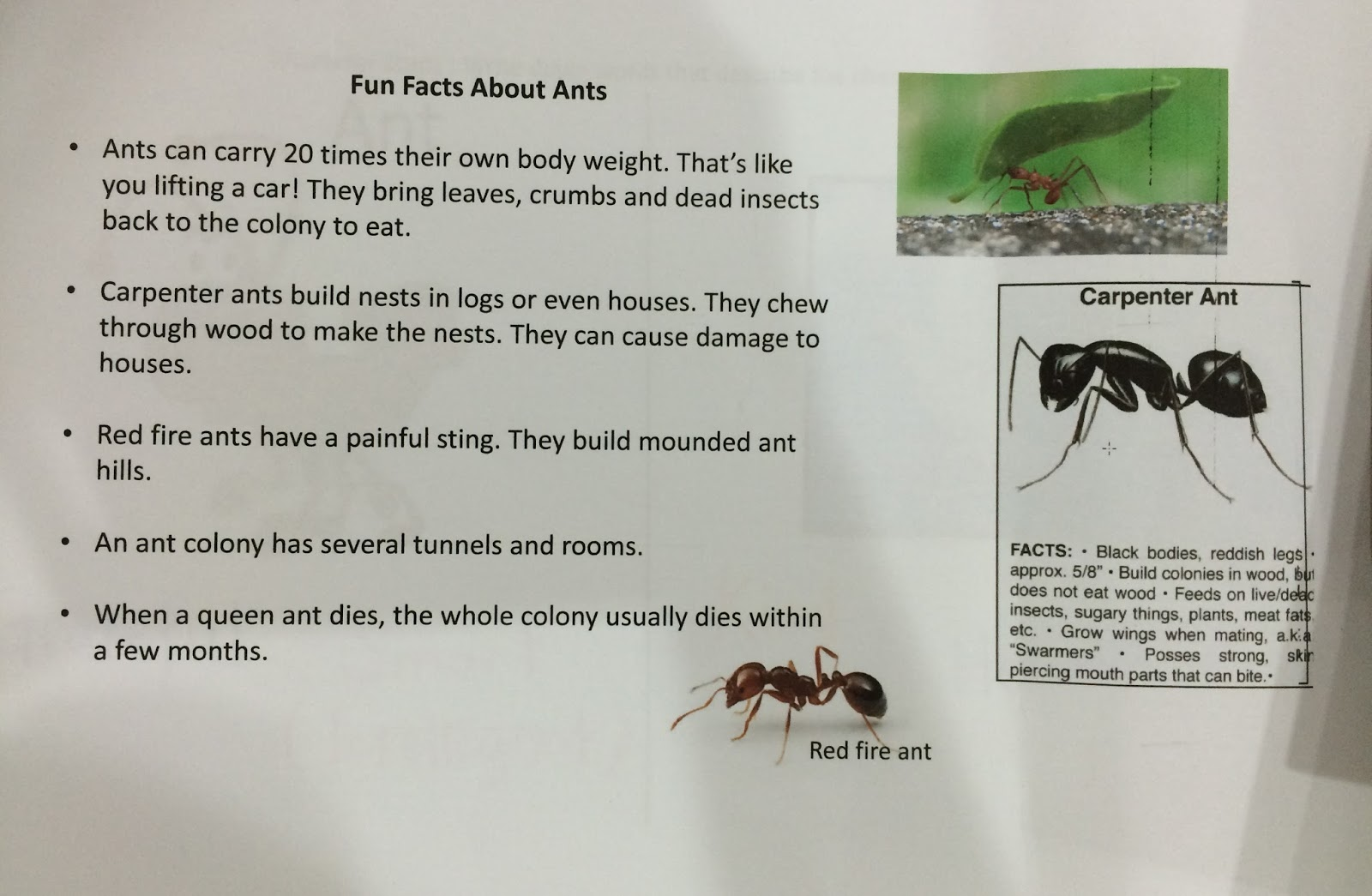 fun facts about ants for preschoolers raising our successful children singapore 219
