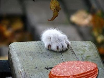 Ох уж эти кошки. Кошачья лапа и колбаса на столе. Фото.