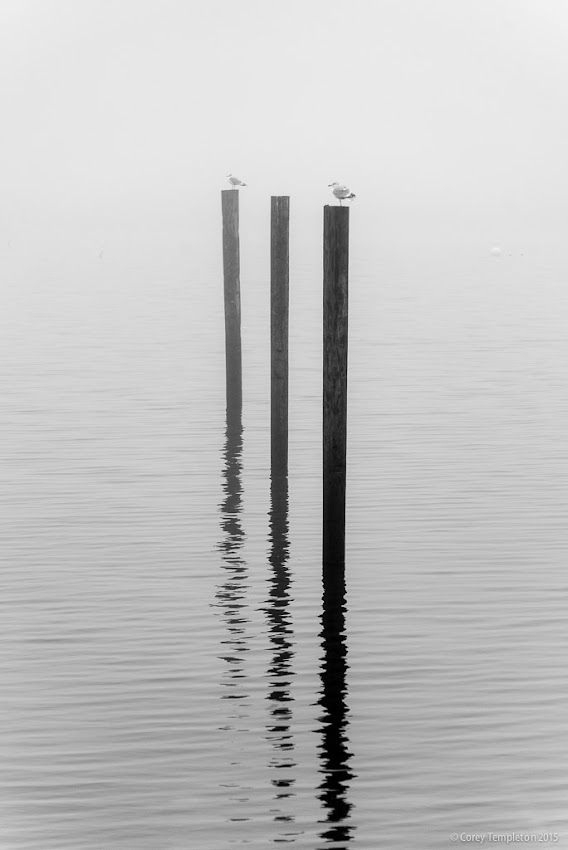 Portland, Maine USA December 2015 photo by Corey Templeton. From a black and white sort of day along the East End Beach.