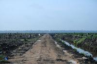 Für Palmöl gerodeter Regenwald