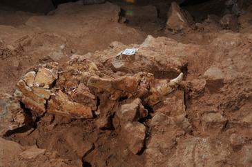 oso-Atapuerca.jpg