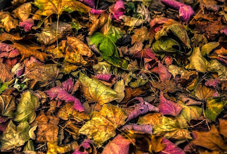Flores y Frutos del Bosque