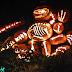5000 Abóboras criam um visual incrível para uma exposição sobre o Halloween