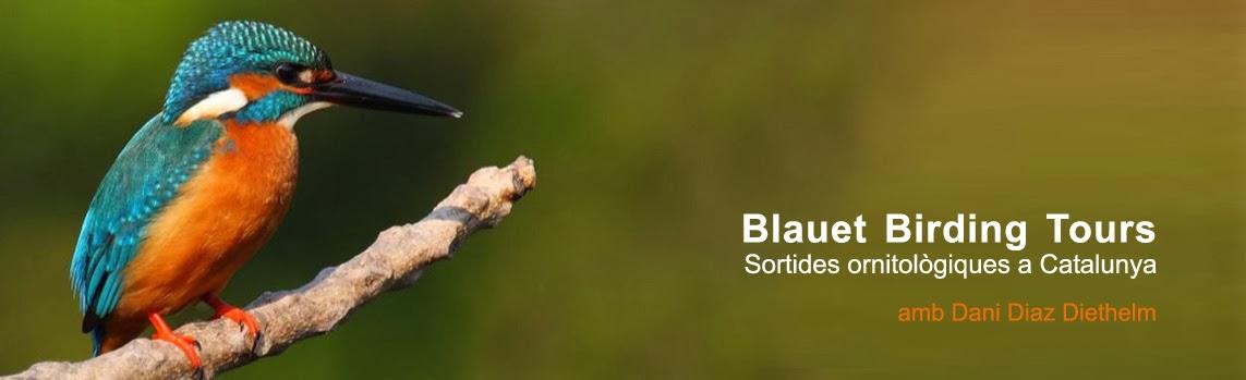 Blauet  Birding Tours/BBT