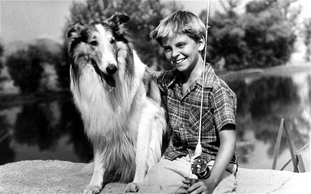 http://www.telegraph.co.uk/culture/10194478/First-Batman-then-Superman-and-now-superhero-collie-Lassie-to-be-revived.html