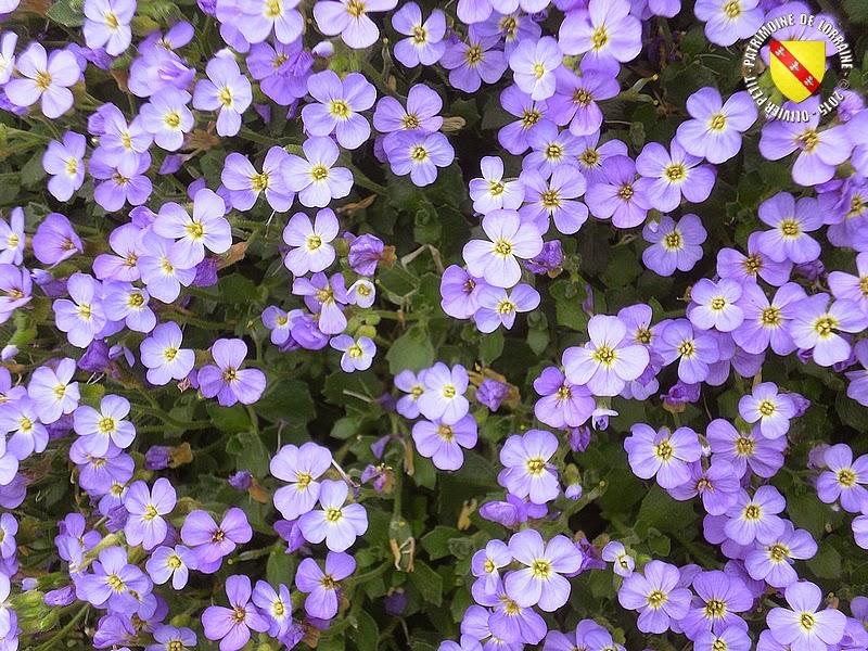 VILLERS-LES-NANCY (54) : Le jardin botanique du Montet-Aubriète