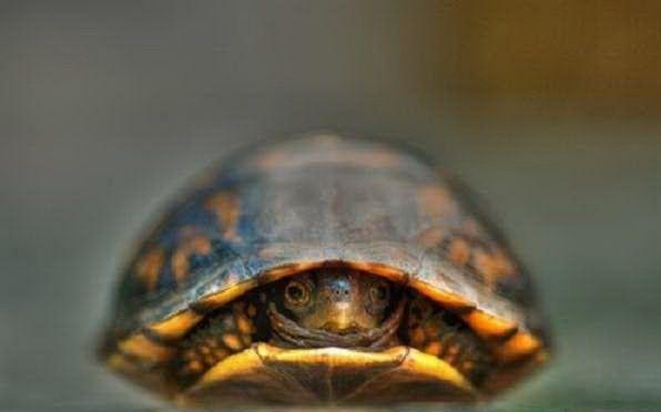 Little turtles cute 100knot - Cute turtle pics ...