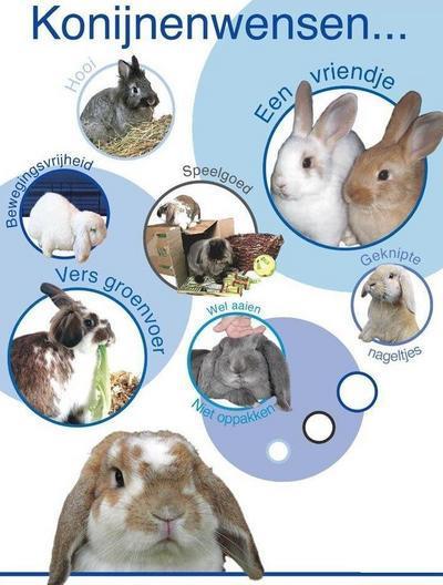 Wat konijntjes graag willen...